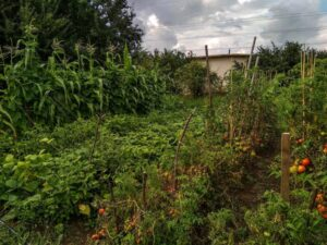 Солидарна градина / Solidarity garden